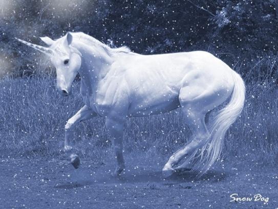 Snow-Unicorn-unicorns-17788190-800-600